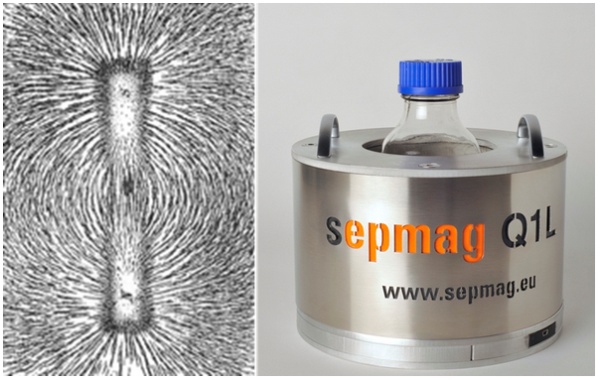 Sepmag systems provide homogeneous magnetic bead separation