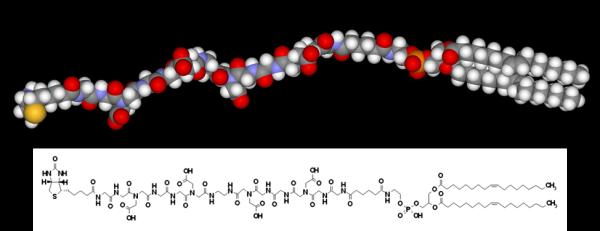schematic of FSL-biotin