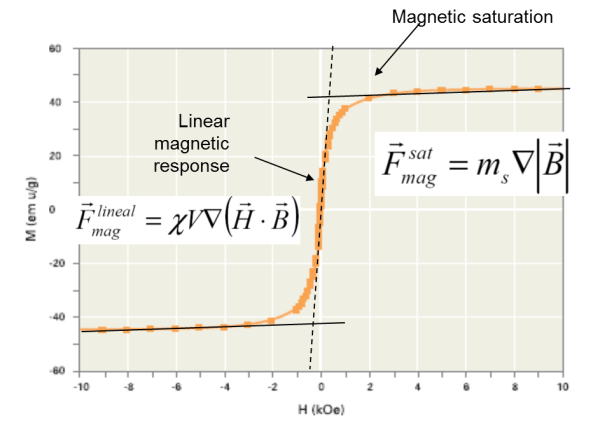 Bead dynamics in magnetic bead separation depend on magnetic behavior