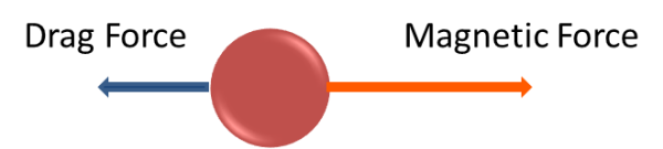 Drag force is against magnetic force in magnetic bead separation