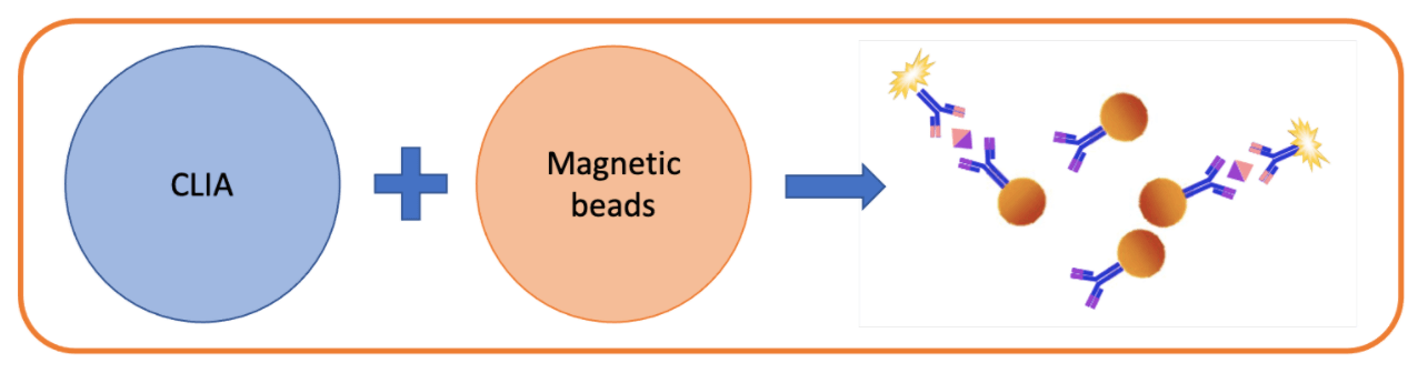 Chapter 1 - Magnetic beads in CLIA 1