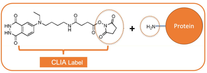 Chapter 6. CLIA-label protein conjugation