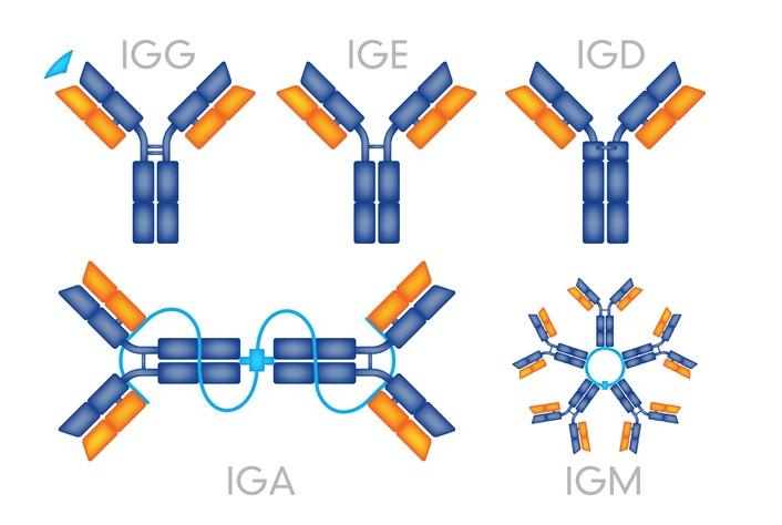 Protein A vs Protein G